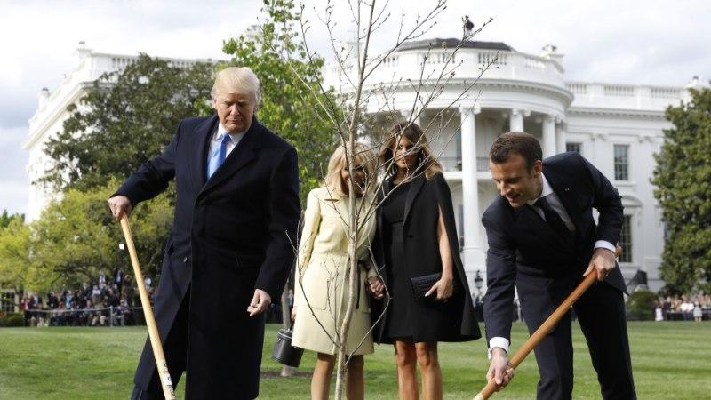 PILTUUDIS   Macroni ja Trumpi istutatud puu asemel laiub vaid kollakas murulapp