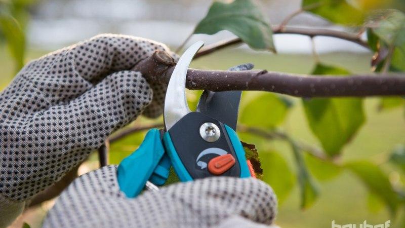 HAKKAME PIHTA: kevadised aiatööd on lopsaka aia vundament!