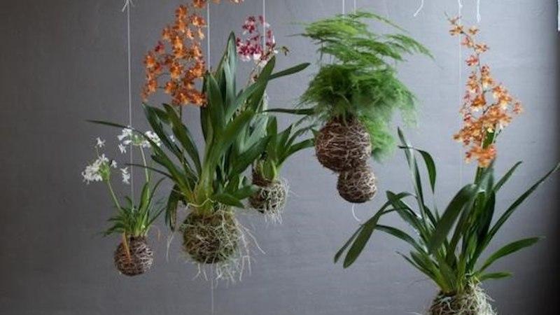 Tee ise! Rippuvad taimed samblapallis ehk Jaapani kokedama!