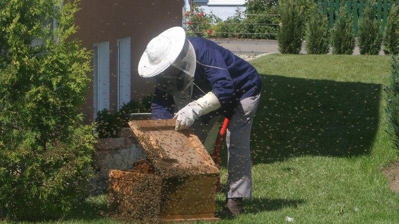 Пчеловод насиловал молодую возлюбленную, заковав в кандалы на пасеке