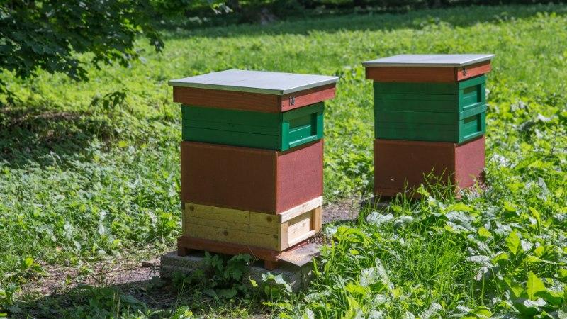 Põllumajanduskoda: taimekaitsetöid tehes tuleb arvestada ka mesilastega