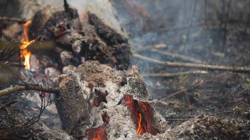 Päästjad kustutasid Anijas maastikutulekahju