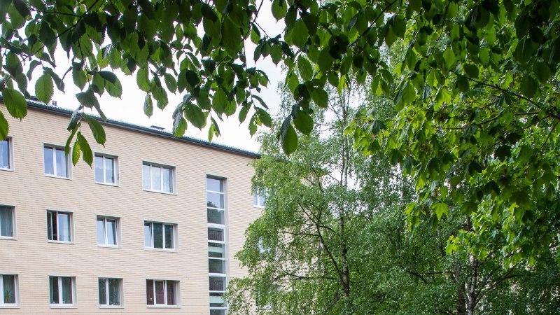 Linnamesilased elavad garaaži, hotelli ja ülikooli katusel