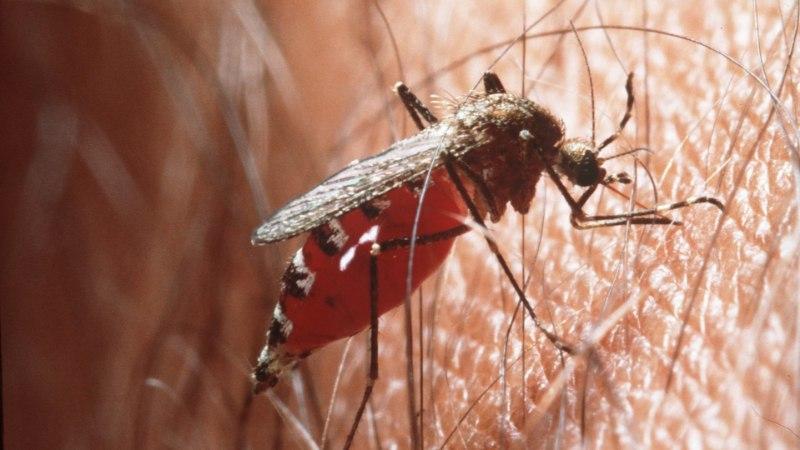 Tänavu kõikjal pinisevad sääsed levitavad mitut haigust
