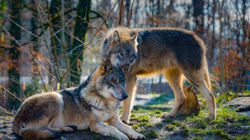 Elistvere loomapark kavatseb soetada hundid