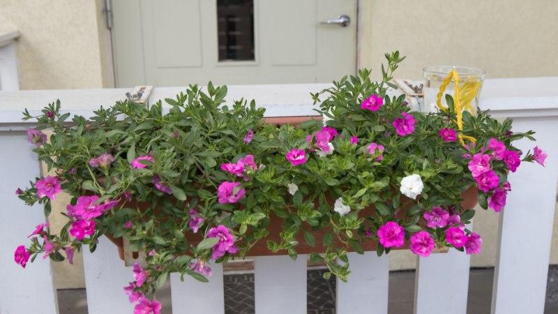 NUTIKA AEDNIKU KASTMISNÕKSUD: vaata, kuidas suveseikluste ajal taimed kastetud saaks!