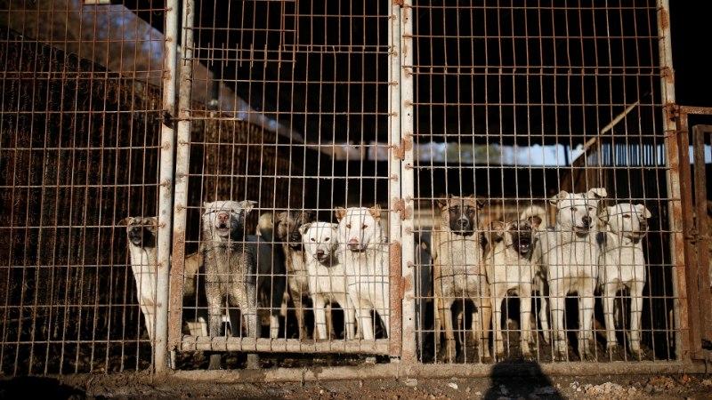 LÕUNA-KOREA KOHUS: koera tapmine toiduks on seadusevastane