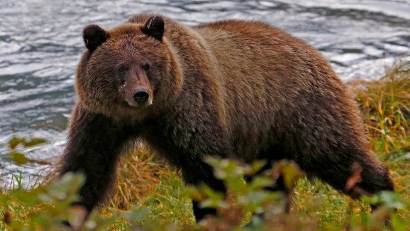 Karu tegi ajaloolise visiidi Vilsandile