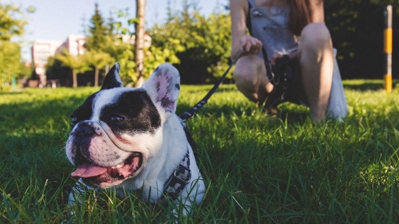 Taskify aitab suvepuhkuse ajal kiirelt ja mugavalt lisaraha teenida