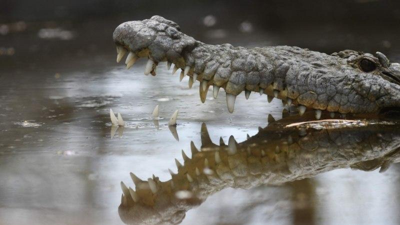 Etioopias tappis krokodill ristimistseremooniat läbi viinud pastori