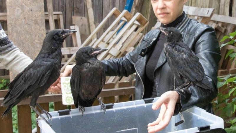 Veretöö jõekaldal: jõhkard tallas linnupojad surnuks