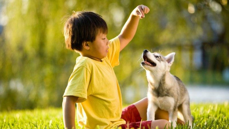 KAKS ANDEKAT: haski ja laps huilgavad nagu staarid