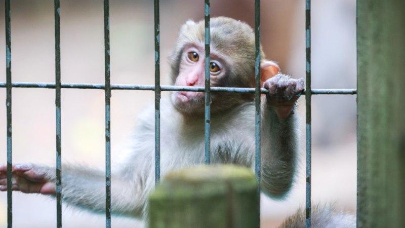 Seisukoht | Inimesed, õppige loomaaias käituma!