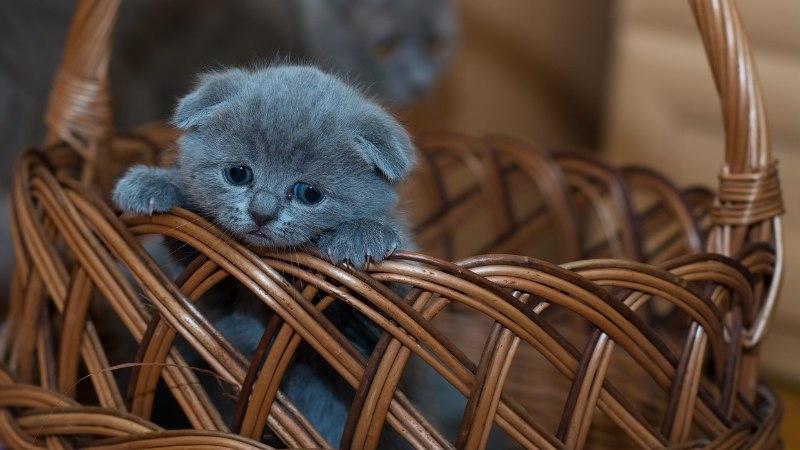 В Силламяэ котенок застрял в трубе и провел там несколько дней. Спасатели: виноваты те, кто подкармливает кошек
