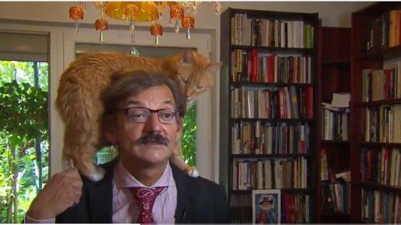 VIDEO | Kass nõudis keset tähtsat teleintervjuud omaniku tähelepanu