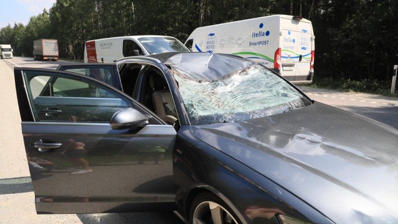 Фото: в Харьюмаа автомобиль столкнулся с лосем. В машине был маленький ребенок