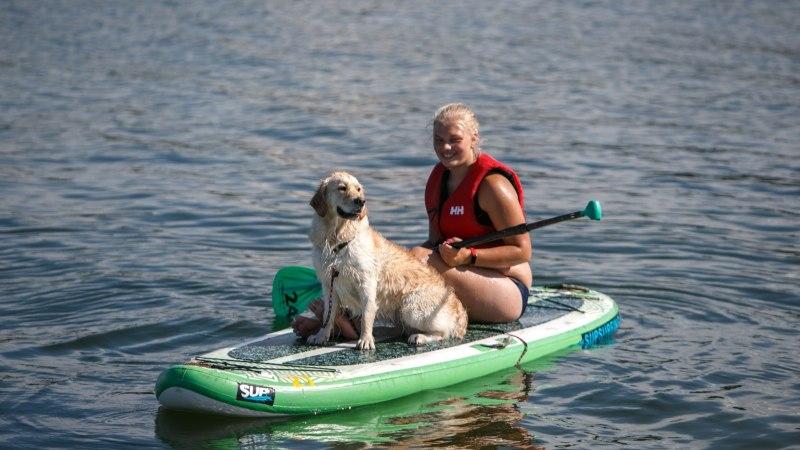GALERII JA VIDEO | Loomaomanikud lõbutsesid merepäevadel oma lemmikutega aerulaudadel