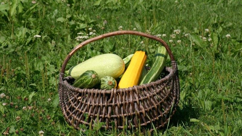 KOLM LEIDU: mida valmistada suvikõrvitsast?