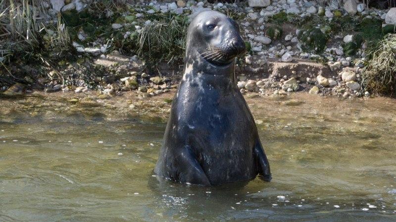 KAART | Eestis on seitse loomaaeda, kõige pisemas elab ainult üks loom
