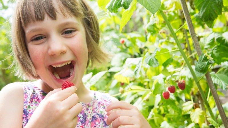 HIINA MEDITSIIN: mida suvel süüa, et püsida terve?