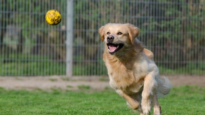 """Кампания """"Будь другом"""" собирает пожертвования для таллиннского приюта для животных и ищет добровольцев"""