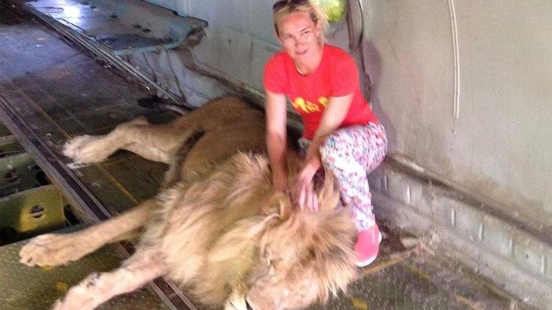Lõvi ründas Ukrainas pildi jaoks poseerinud naist