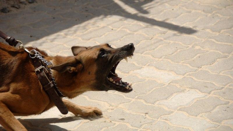 PALJAD HIGISED MEHED | Kes jääb peale: staažikas maadleja või teravate hammastega koer?
