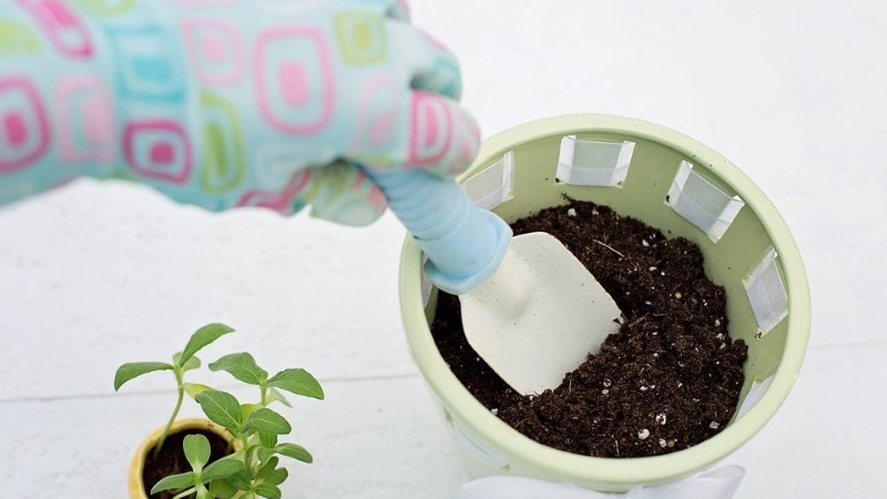 BLOGI   Millisesse potti istutada taimed?