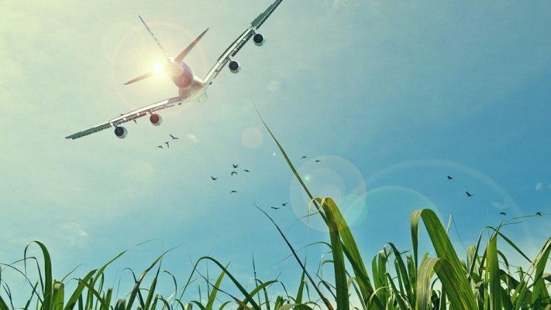 917 miljoni lennu andmetel: millal on parim aeg lennupileti ostmiseks?