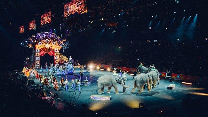 Слониха упала на зрителей во время циркового представления (ВИДЕО)