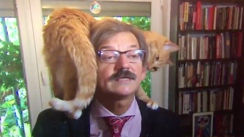 Кот ворвался в интервью и стал героем сети (видео)