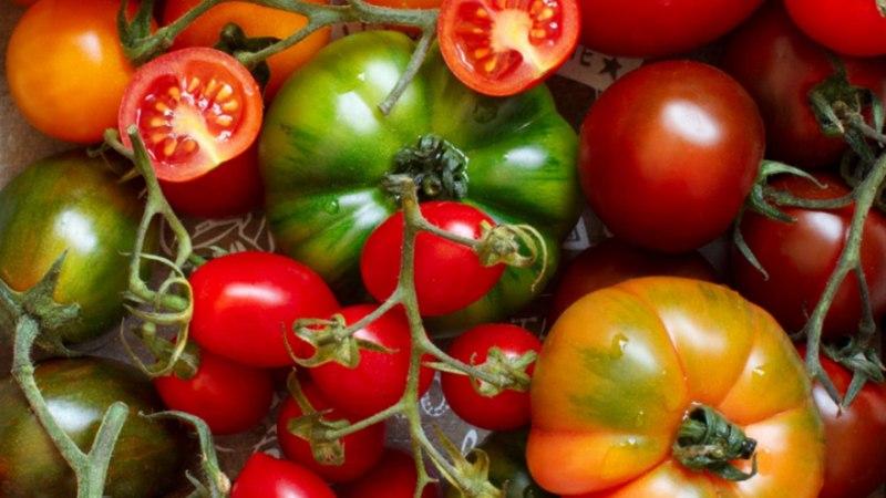 10 eripalgelist rooga tomatist