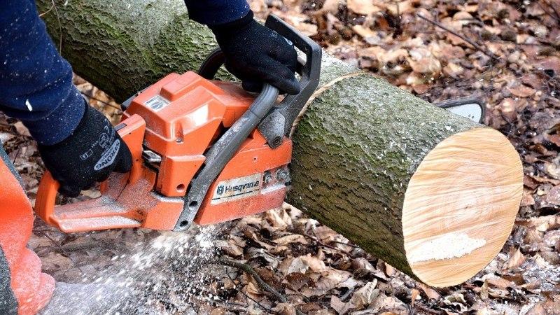 SPETSIALIST VASTAB: kas puid tohib ise langetada?