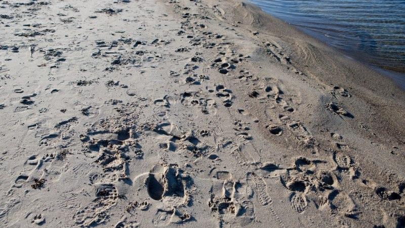 Ettevaatust! Pärnu Raeküla ranna vesi on suplemiseks liiga must