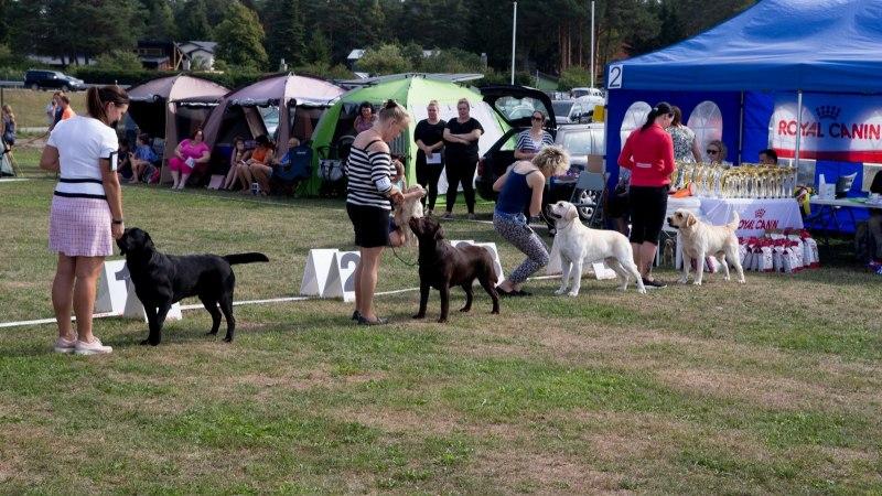 NUNNU GALERII | Luige koertenäitusel osales ligi 3000 koera!
