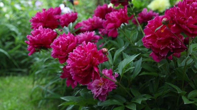 PANE TÄHELE: see on augusti aiatööde meelespea!