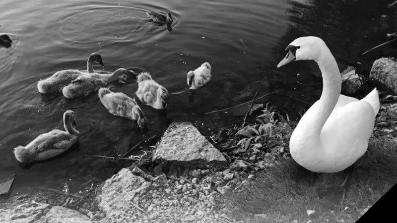 Tallinna linnaosavanemad: inimesed, ärge toitke linde!