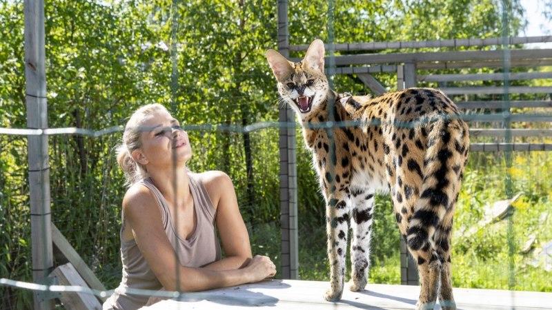 Маардуская семья держит дома редкую и экзотическую кошку