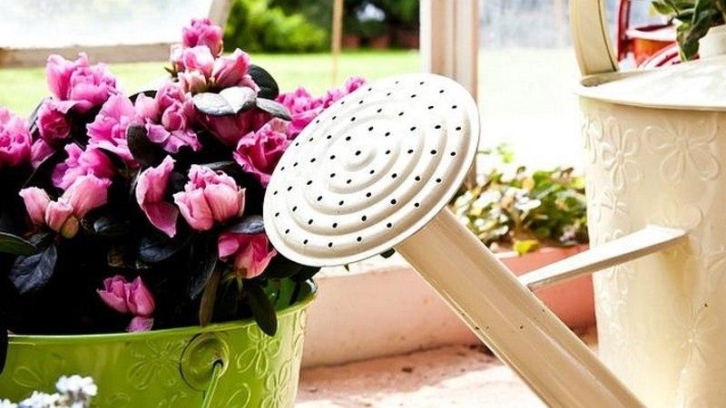 KASULIKKE NIPPE: toataimede kastmise kunst!