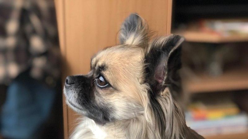 GALERII | Õhtulehe lugejate koerad panevad sulama ka kõige külmema südame!