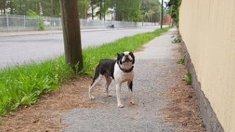 Mailis Reps hulkuvast lemmikust: koduste sõnul on koer olnud terve päeva kodus