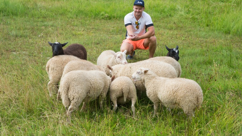 Suusatreener Saarepuu sõbrustab suviti lammastega