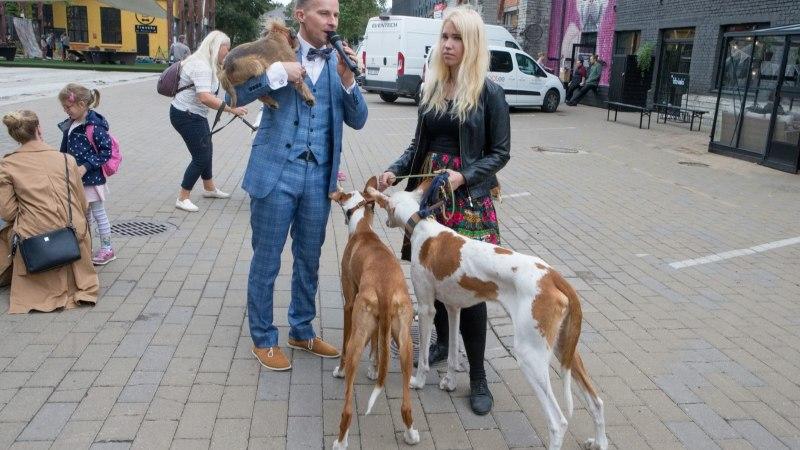 ÕL VIDEO | Eesti populaarseimate Insta-koerte omanik: konto haldamine on kui täiskohaga töö