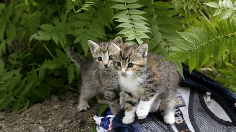 KOHUTAV JULMUS! Häädemeestel lämbusid kassipojad purgis