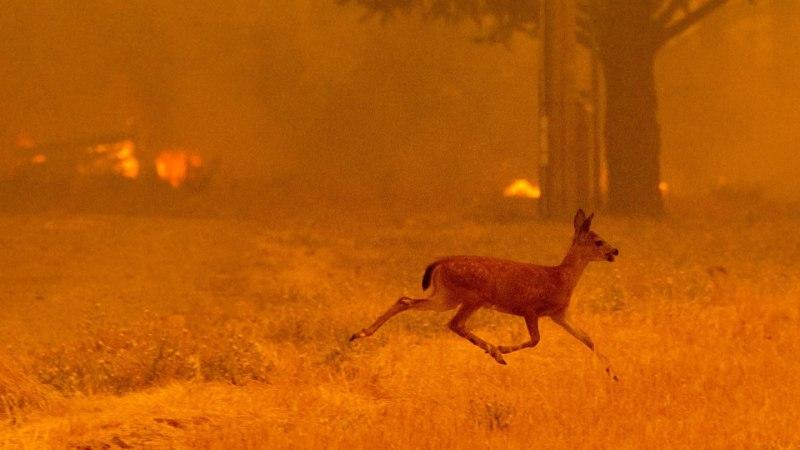 Tappev kuumus piinab eurooplasi – tänavakividel praetakse mune, koerad vajavad saapaid