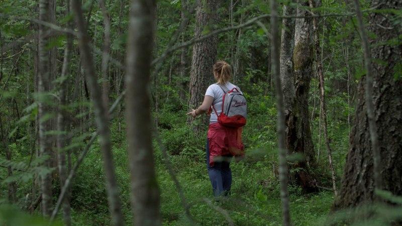 ÄRA EKSI TEELT: metsas uitaja meelespea