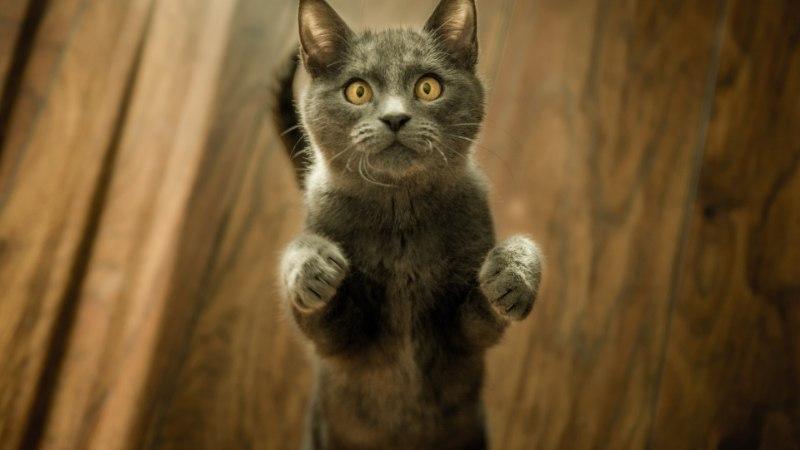 Viis kassi, kellel on Instagramis rohkem jälgijaid kui sinul!