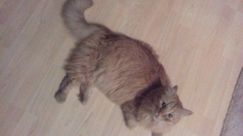 GALERII | Kolmapäeval oli rahvusvaheline kassipäev. Vaata pilte lugejate lemmikutest!