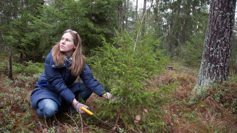 Эстония продаст с аукциона сотни гектаров леса: стоит ли беспокоиться?