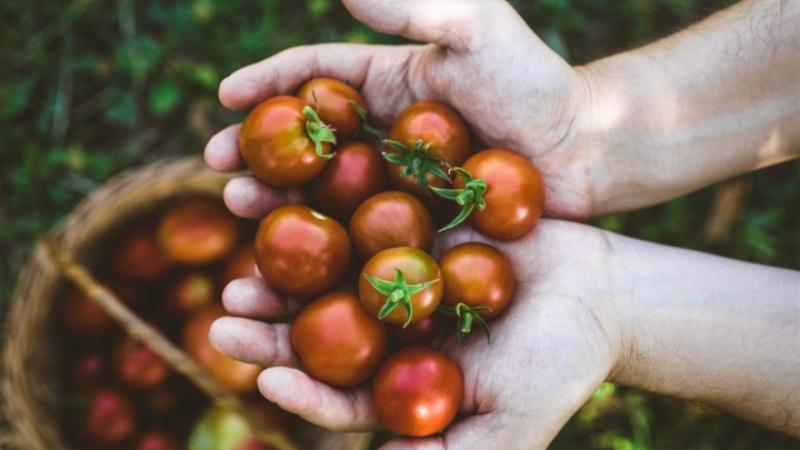 Kolm lihtsat tomatirooga argipäeva